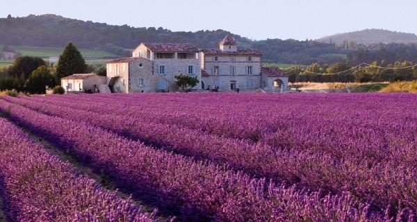 lavender-field-616440_1280-940x500